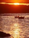 HIPPO - SUNSET CRUISE ON THE CHOBE - CHOBE NATIONAL PARK BOTSWANA (34).JPG
