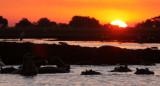 HIPPO - SUNSET CRUISE ON THE CHOBE - CHOBE NATIONAL PARK BOTSWANA (42).JPG