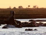 HIPPO - SUNSET CRUISE ON THE CHOBE - CHOBE NATIONAL PARK BOTSWANA (8).JPG