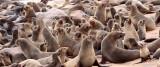 PINNIPED - SEA LION - CAPE FUR SEAL - CAPE CROSS, NAMIBIA (22).JPG
