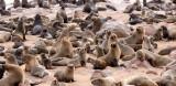 PINNIPED - SEA LION - CAPE FUR SEAL - CAPE CROSS, NAMIBIA (30).JPG