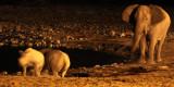 RHINO - BLACK RHINO - WATERHOLE AT NIGHT - ETOSHA NATIONAL PARK NAMIBIA (58).JPG