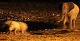 RHINO - BLACK RHINO - WATERHOLE AT NIGHT - ETOSHA NATIONAL PARK NAMIBIA (60).JPG