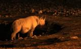 RHINO - BLACK RHINO - WATERHOLE AT NIGHT - ETOSHA NATIONAL PARK NAMIBIA (9).JPG