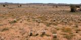 ASTERACEAE - DESERT COMMUNITY - GOEGAP NATURE RESERVE SOUTH AFRICA.JPG
