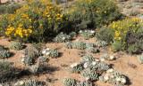 NAMAQUALAND - KOKERBOOM PLANT COMMUNITY  - GOEGAP NATURE RESERVE SOUTH AFRICA (18).JPG
