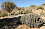 NAMAQUALAND - KOKERBOOM PLANT COMMUNITY  - GOEGAP NATURE RESERVE SOUTH AFRICA (25).JPG