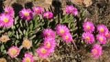 NAMAQUALAND - KOKERBOOM PLANT COMMUNITY  - GOEGAP NATURE RESERVE SOUTH AFRICA (31).JPG