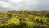 TABLE MOUNTAIN NATIONAL PARK - COASTAL FYNBO PLANT COMMUNITY (18).JPG