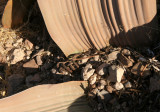 WELWITSHIACEAE - WELWITSCHIA MIRABILIS - SKELETON COAST NATIONAL PARK NAMIBIA (7).JPG