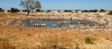 NAMIBIA - ETOSHA NATIONAL PARK WATERHOLE.JPG