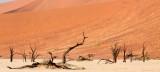 SOSSUSVLEI, NAMIB NAUKLUFT NATIONAL PARK, NAMIBIA - DEAD VLEI (19).JPG