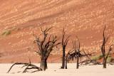 SOSSUSVLEI, NAMIB NAUKLUFT NATIONAL PARK, NAMIBIA - DEAD VLEI (20).JPG
