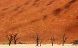 SOSSUSVLEI, NAMIB NAUKLUFT NATIONAL PARK, NAMIBIA - DEAD VLEI (30).JPG