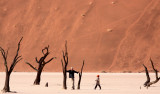 SOSSUSVLEI, NAMIB NAUKLUFT NATIONAL PARK, NAMIBIA - DEAD VLEI (44).JPG
