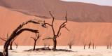 SOSSUSVLEI, NAMIB NAUKLUFT NATIONAL PARK, NAMIBIA - DEAD VLEI (5).JPG