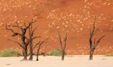 SOSSUSVLEI, NAMIB NAUKLUFT NATIONAL PARK, NAMIBIA - DEAD VLEI (59).JPG