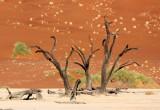 SOSSUSVLEI, NAMIB NAUKLUFT NATIONAL PARK, NAMIBIA - DEAD VLEI (65).JPG