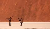 SOSSUSVLEI, NAMIB NAUKLUFT NATIONAL PARK, NAMIBIA - DEAD VLEI (77).JPG