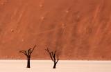 SOSSUSVLEI, NAMIB NAUKLUFT NATIONAL PARK, NAMIBIA - DEAD VLEI (79).JPG
