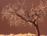 SOSSUSVLEI, NAMIB NAUKLUFT NATIONAL PARK, NAMIBIA - SESREIM VIEWS (10).JPG