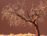 SOSSUSVLEI, NAMIB NAUKLUFT NATIONAL PARK, NAMIBIA - SESREIM VIEWS (10).JPG