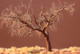 SOSSUSVLEI, NAMIB NAUKLUFT NATIONAL PARK, NAMIBIA - SESREIM VIEWS (12).JPG