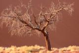 SOSSUSVLEI, NAMIB NAUKLUFT NATIONAL PARK, NAMIBIA - SESREIM VIEWS (12).JPG