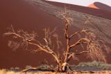 SOSSUSVLEI, NAMIB NAUKLUFT NATIONAL PARK, NAMIBIA - SESREIM VIEWS (9).JPG