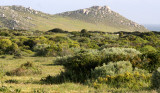 WEST COAST NATIONAL PARK SOUTH AFRICA - COASTAL FYNBO COMMUNITY.JPG