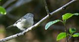 BIRD - RUBY-CROWNED KINGLET - LAKE FARM WOODS TRAILS (13).JPG