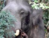 ELEPHANT - ASIAN ELEPHANT - KHAO YAI THAILAND - CHRISTMAS IN THAILAND TRIP 2008 (46).JPG