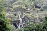 KOH LANTA - NATIONAL PARK FOREST TREK (7).JPG