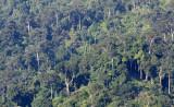 KRUNG CHIN - KHAO LUANG NP - FOREST VIEWS  (3).JPG