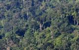KRUNG CHIN - KHAO LUANG NP - FOREST VIEWS  (4).JPG