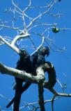 BIRD - MACAW - HYACINTH - PANTANAL C.jpg