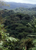 COSTA RICA - FOREST CANOPY WITH EMERGENTS.jpg