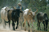 PANTANAL - COWBOY.jpg