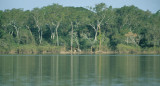PANTANAL - FLOODED FOREST ZONE.jpg