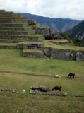 PERU - MACCHU PICCHU W.jpg