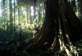 PERU - MANU - FOREST GIANT.jpg