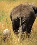 ELEPHANT - SERENGETI 10.jpg