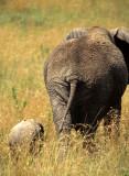 ELEPHANT - SERENGETI 13.jpg