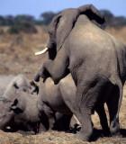 ELEPHANT - ZIMBABWE E.jpg
