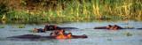HIPPO- OKAVANGO.jpg