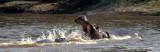 HIPPO- SERENGETI - FIGHT 3.jpg