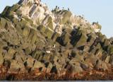 COMMANDER ISLAND - BIRD ISLAND.jpg