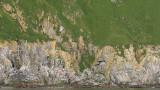 COMMANDER ISLANDS - MEDNY ISLAND  (17).jpg