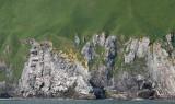 COMMANDER ISLANDS - MEDNY ISLAND  (21).jpg