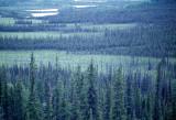 ALASKA - TETSLIN NWR - TAIGA.jpg